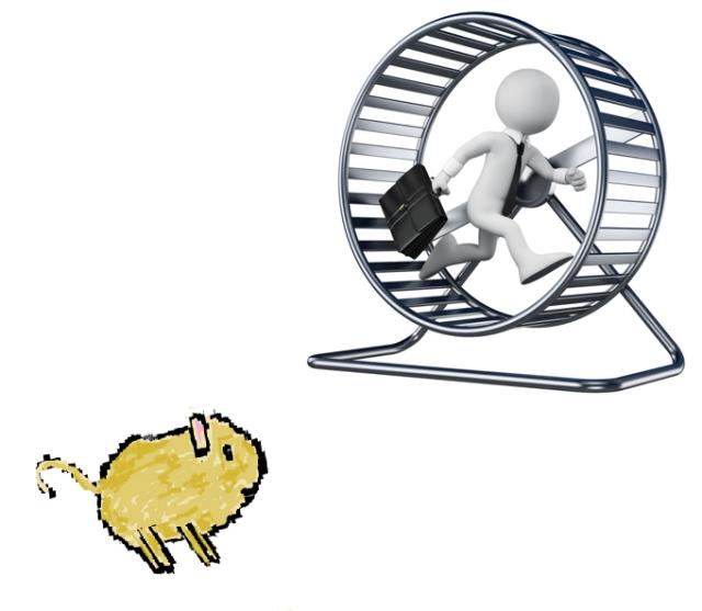 hamster watching man on Hamster Wheel