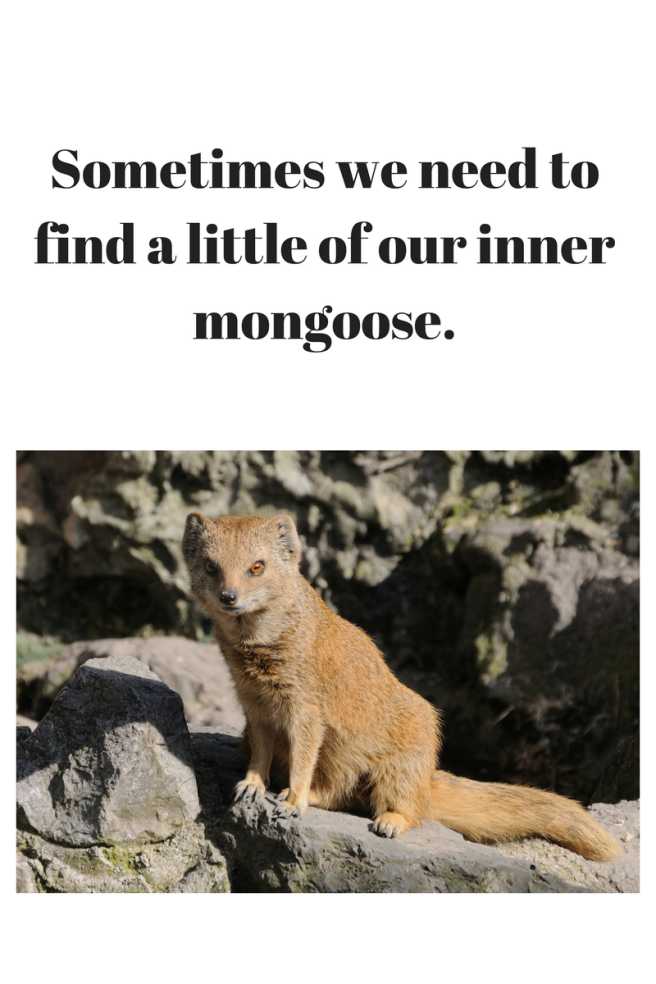 Sometimes we might need to find a little of our inner mongoose. A