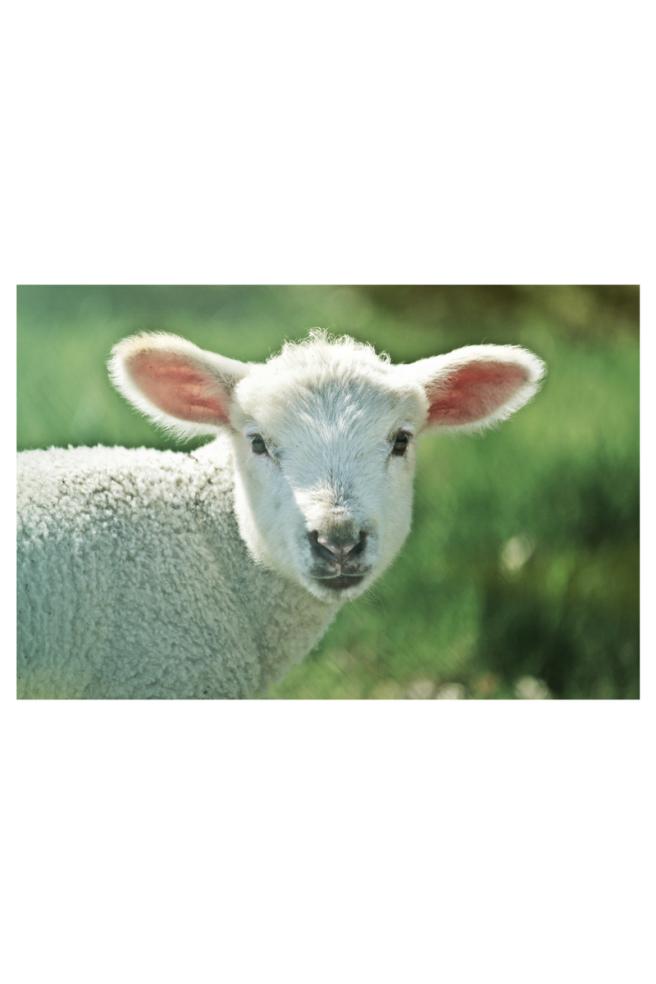 passover lamb.png