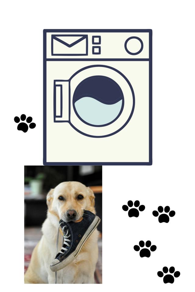 Dog doing laundry